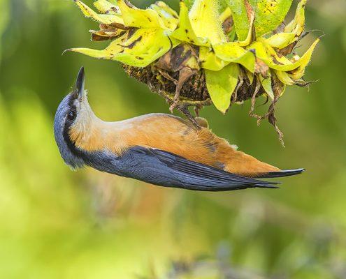 Birding in India