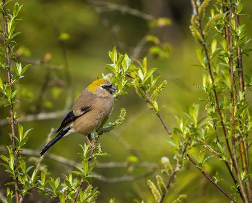 Birdind in India